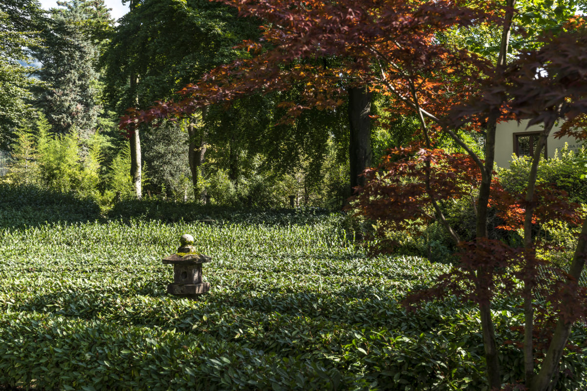Teeplantage Monte Verita
