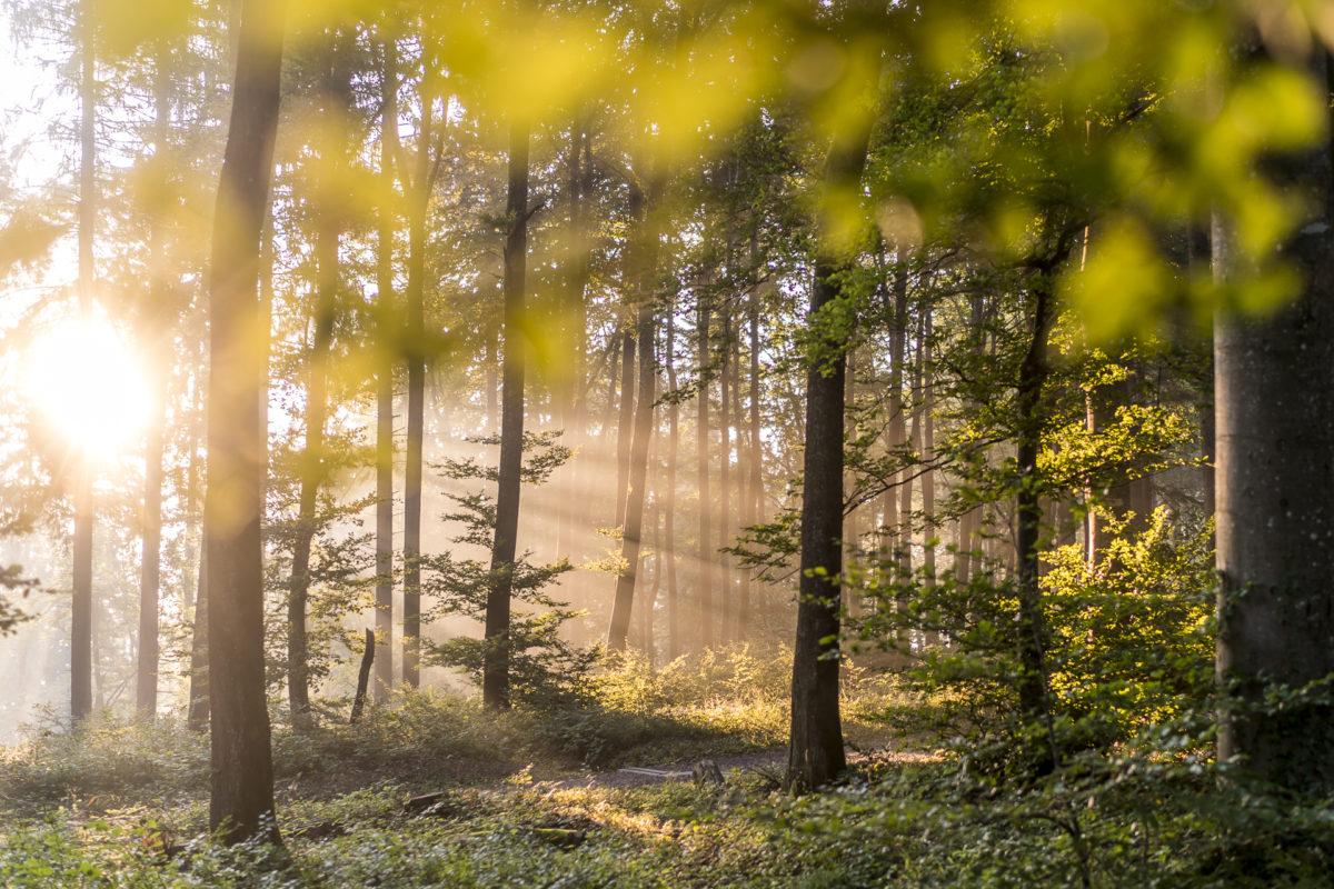 Uetliberg Albispass Wald