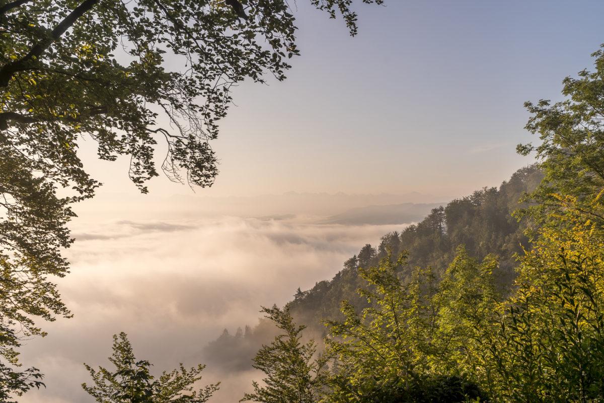 Uetliberg-Wanderung-Albisgrat