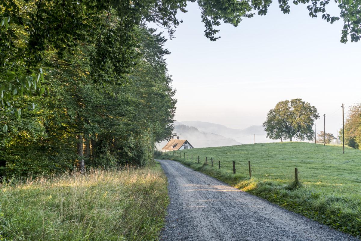 Uetliberg Wanderweg Albispass