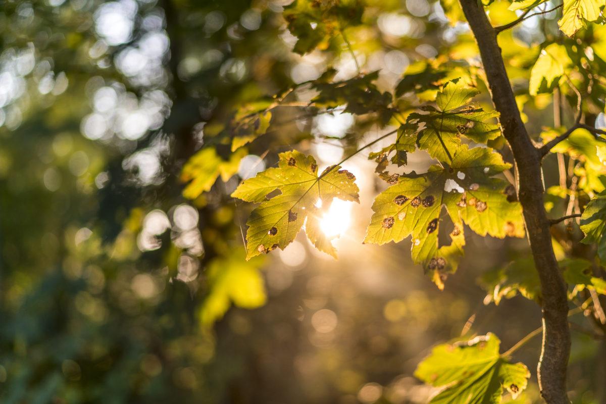 Waldstimmung Herbst Uetliberg