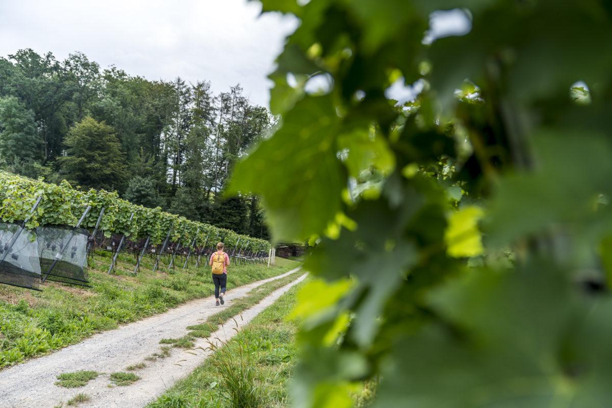 Weingüterwanderung Seetal