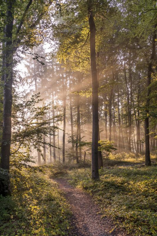 Uetliberg Albispass Morgenlicht