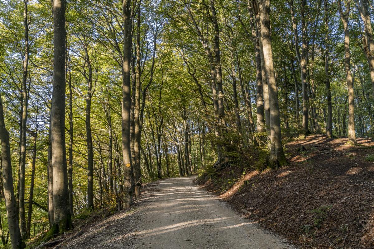 Jura Höhenweg Lägern