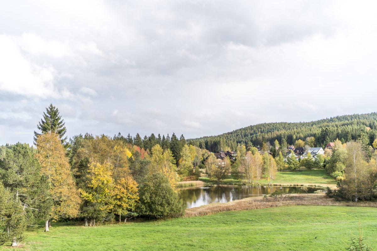 Aussicht WaldFunkeln Lodge