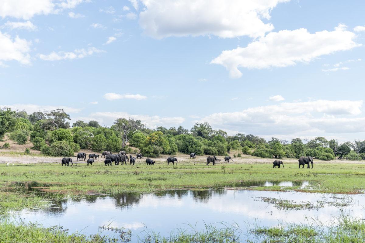 Chobe River Elefanten baden