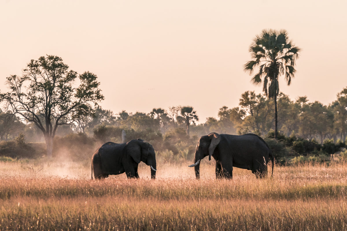 Chobe-Nationalpark & Okavango Delta: unsere Botswana Safari Highlights