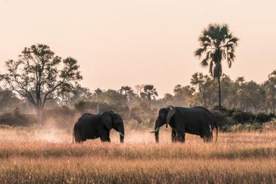 Elefanten Sonnenuntergang