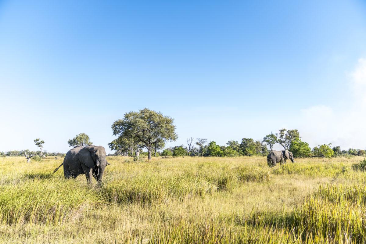 Okavango Delta Elefanten