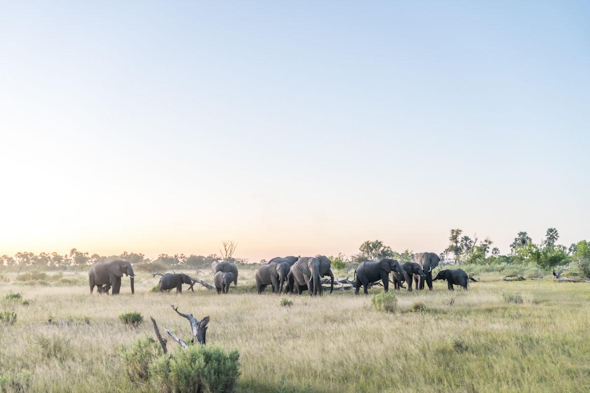 Okavango Delta Elefantenherde