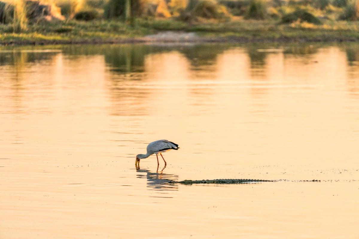 Okavango Delta Vögel