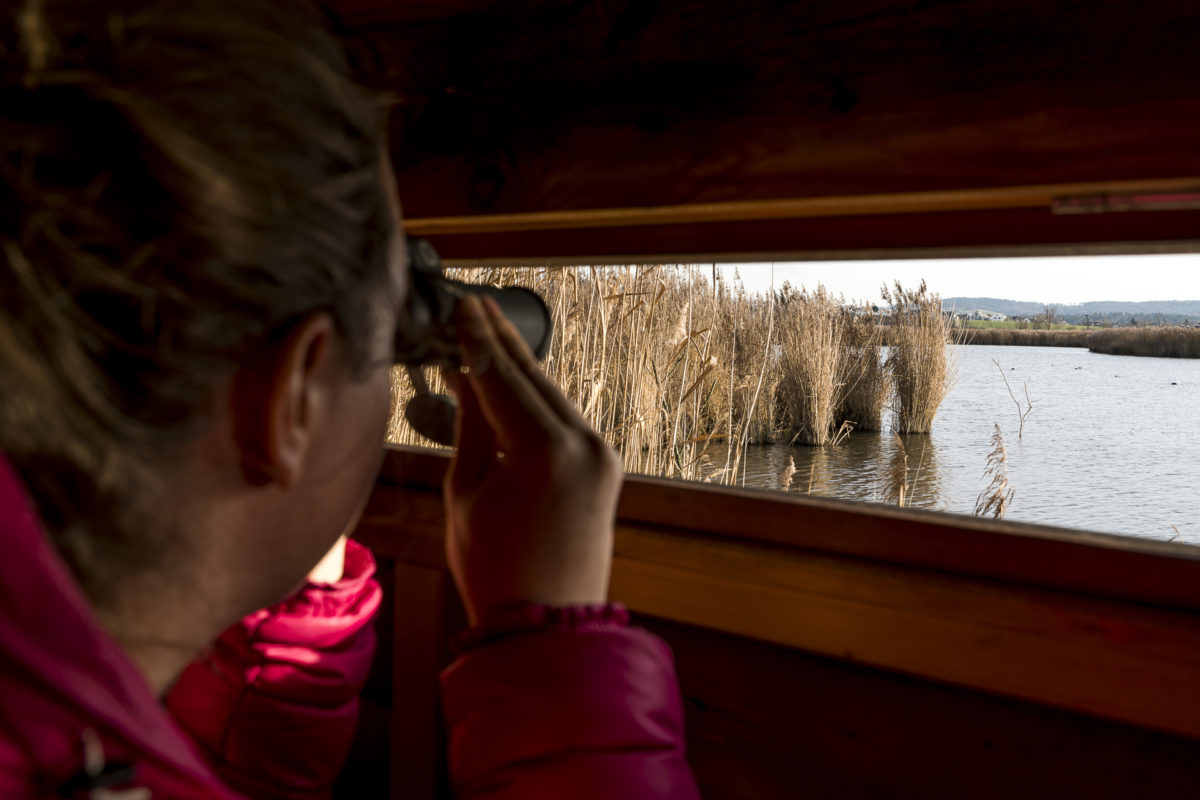 Neeracherried Vogelbeobachtung