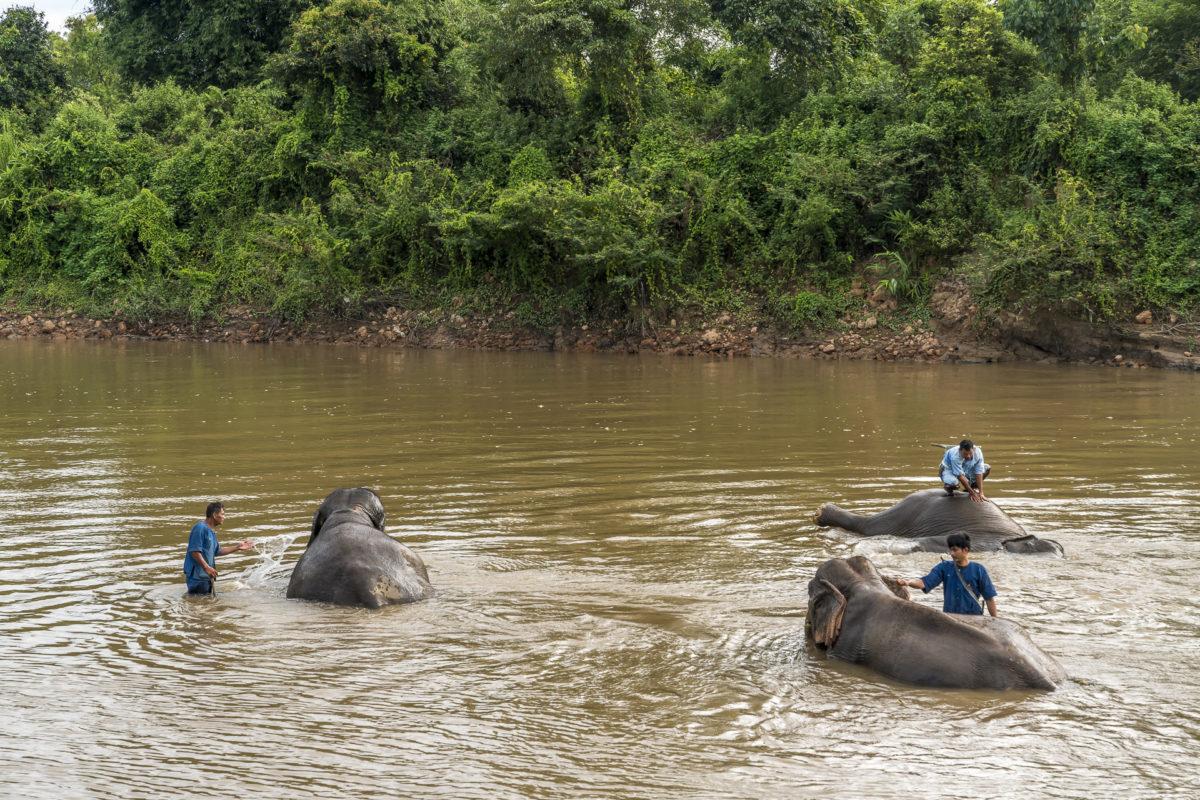Elephant Experiences Anantara