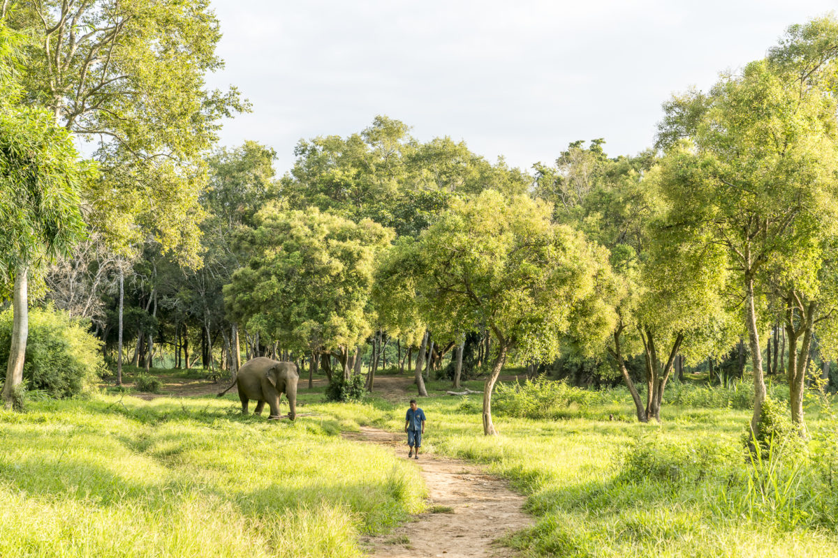 Anantara Walking with Giants