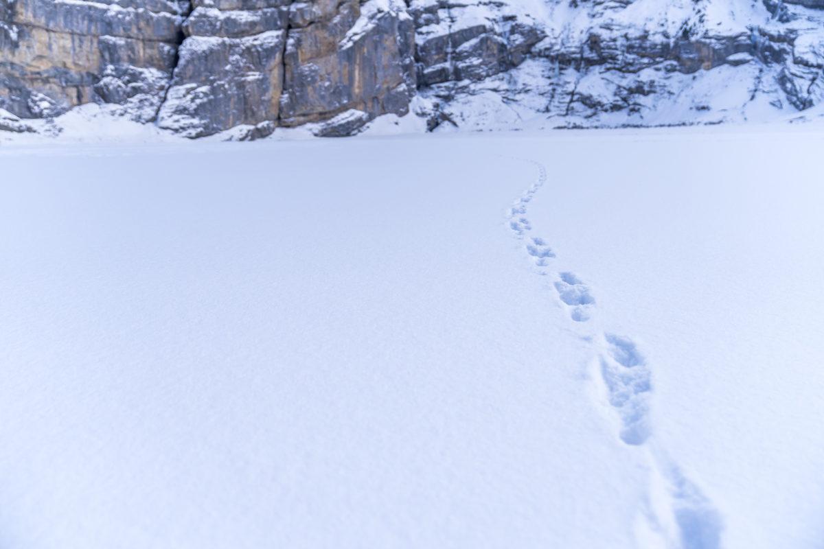 Ice Walk Spuren im Schnee