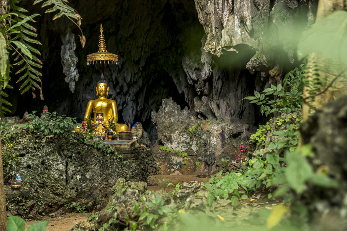 Waldmoench Nordthailand