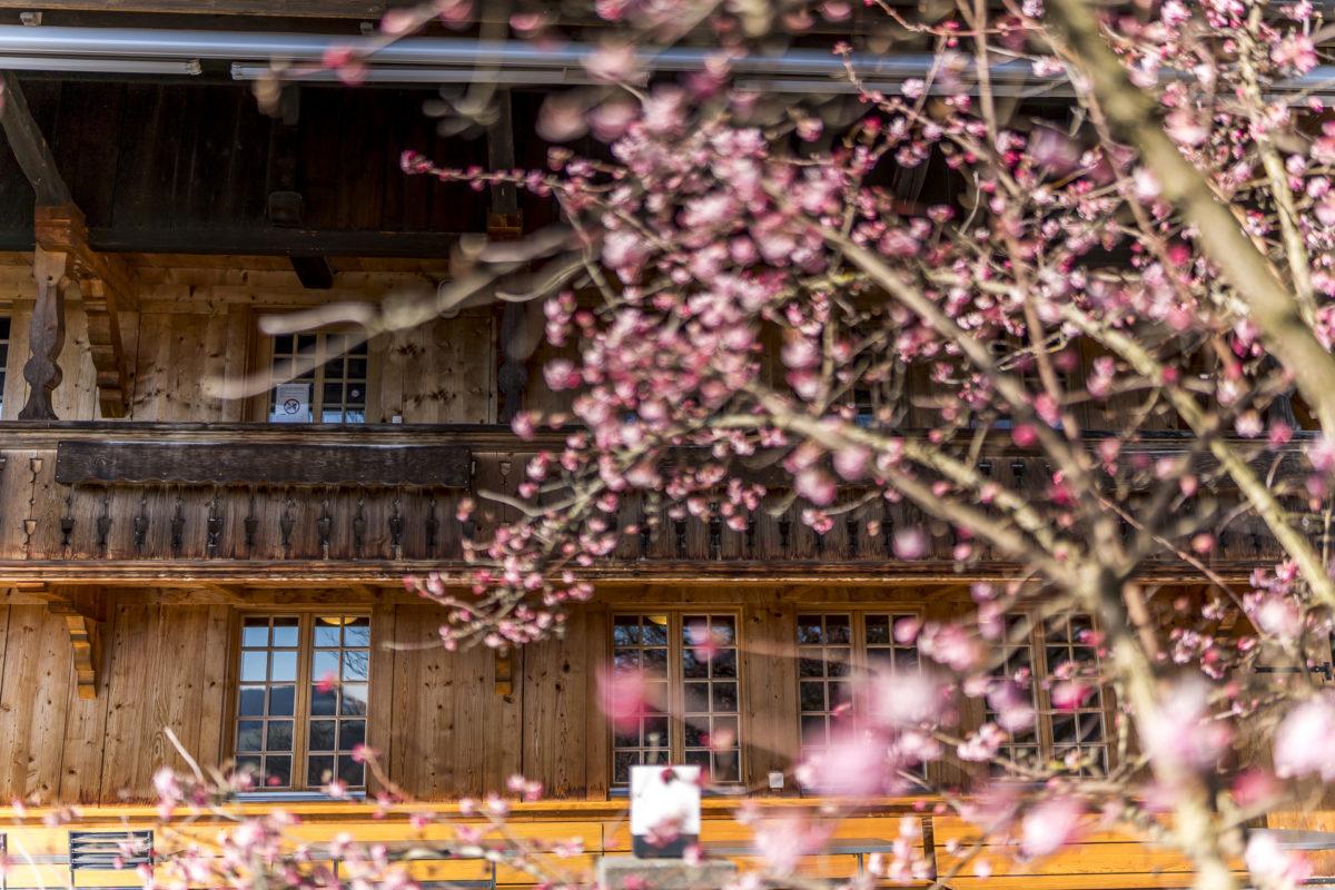Frühling im Rüttihubelbad