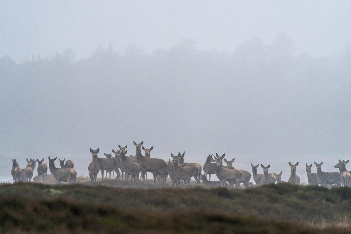 Dänemark Roadtrip Erlebnisse - Hirsche