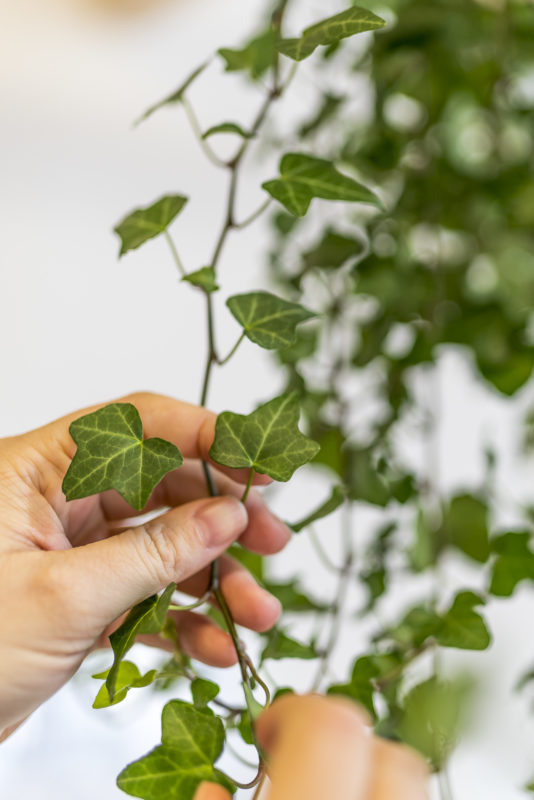 Sensorium Pflanzen