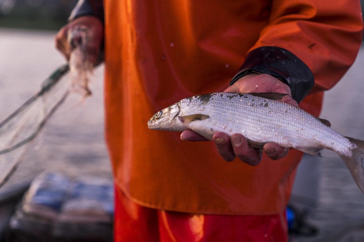 Fischen auf dem Bodensee