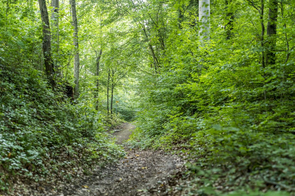Wald Thurgauer Seerücken