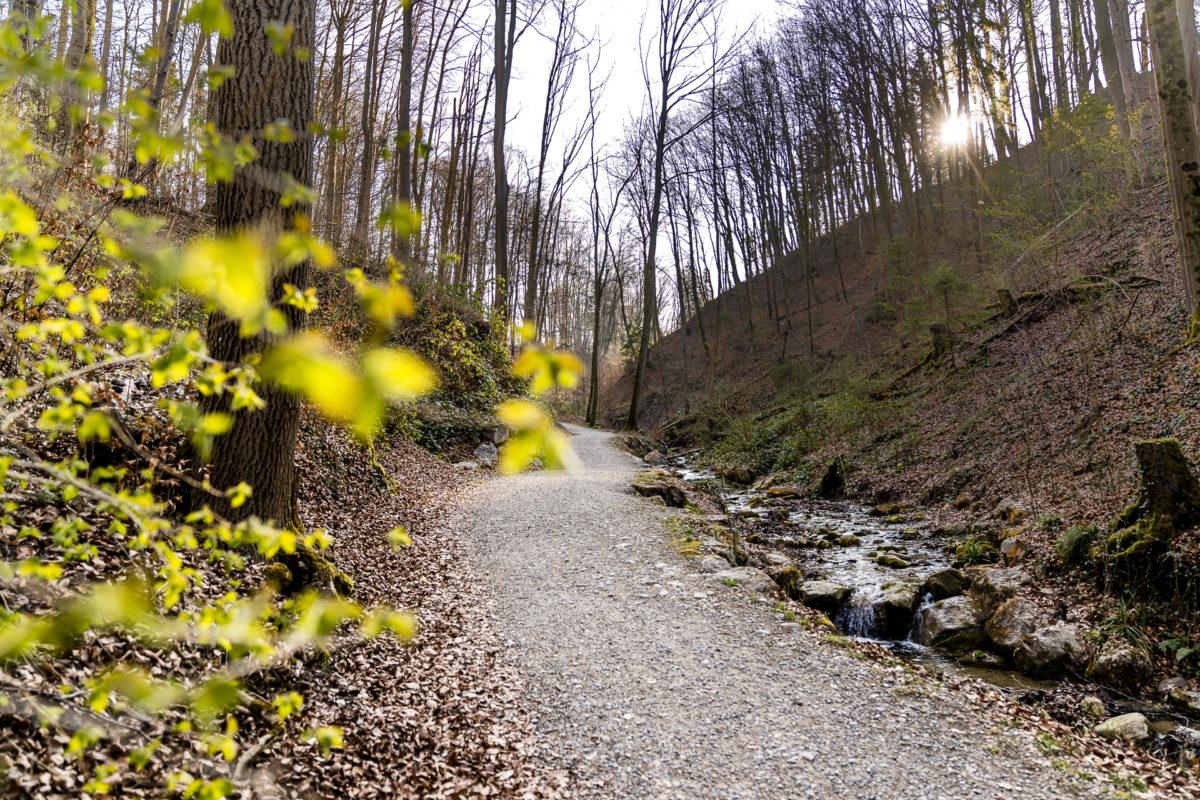 Geologisches Wandern in Zürich