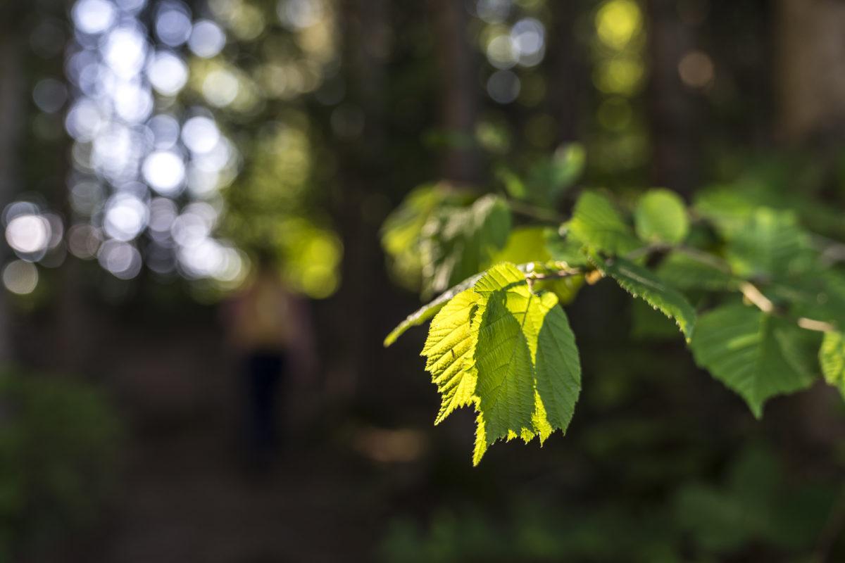 Detail Wald Blatt