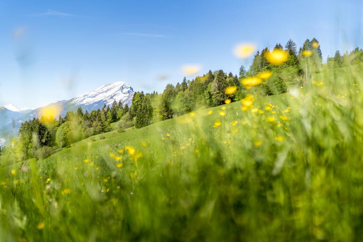 Frühling im Prättigau