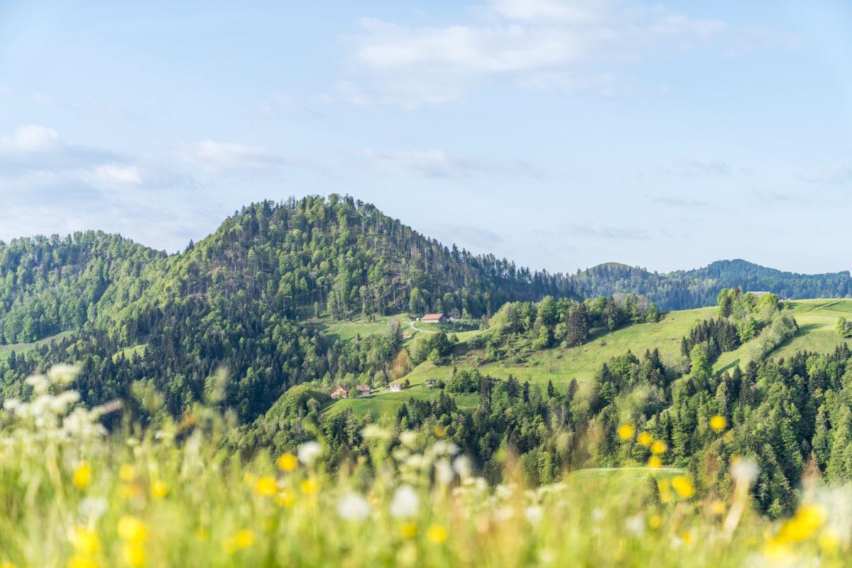 Frühling im Zürcher Oberland
