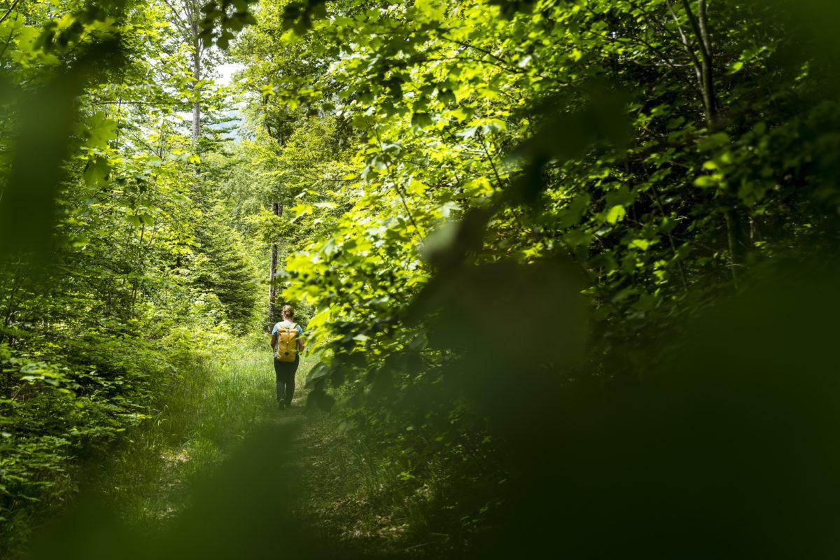 Jura-Höhenweg Waldweg