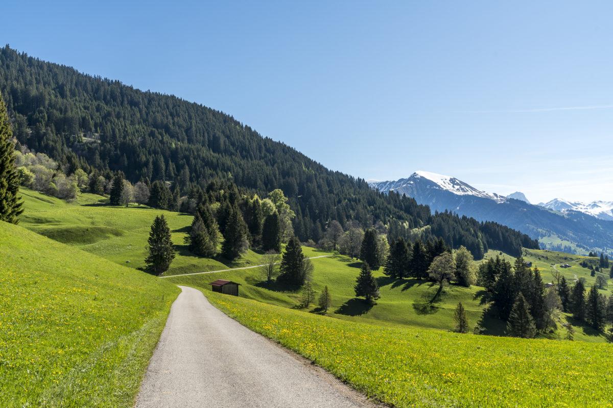 Narzissenwanderung Seewis Prättigau