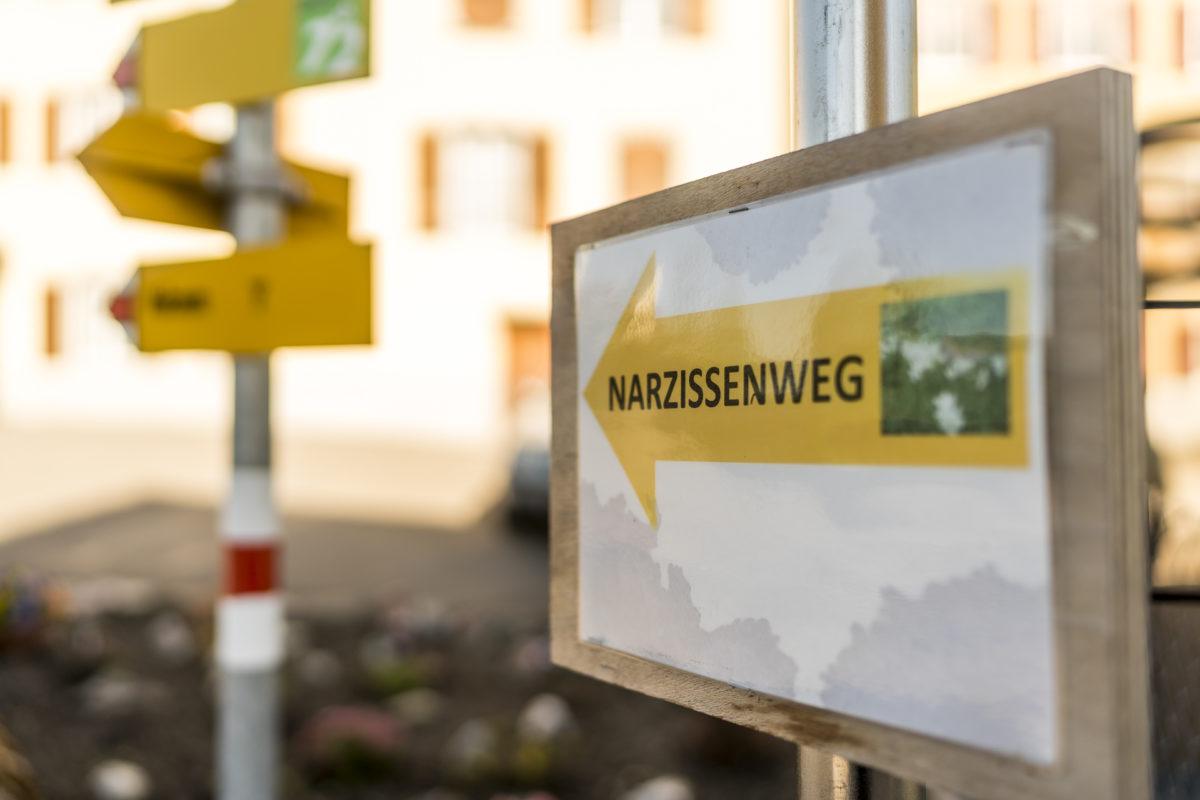 Narzissenweg Seewis