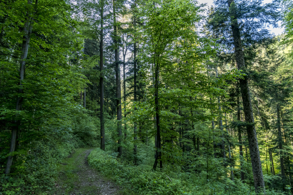 Neckertaler Höhenweg Etappe 1 Wald