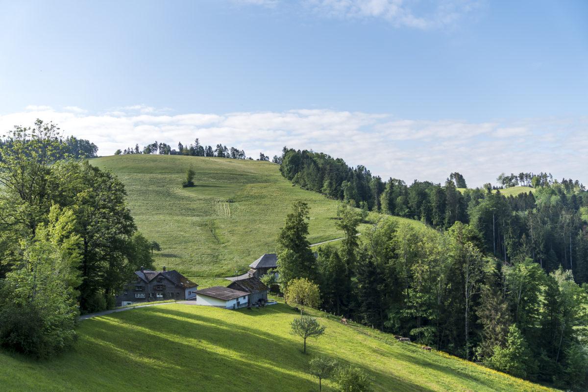 Neckertaler Höhenweg Landschaft
