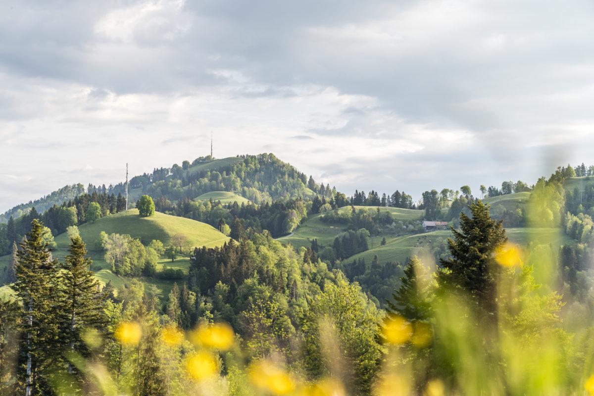 Schebelhorn Wanderung Landschaft