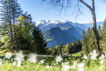 Narzissenweg Seewis - Blütenpracht im Prättigau