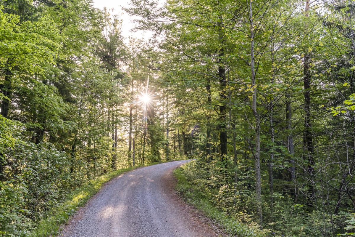 Wald Tösstal