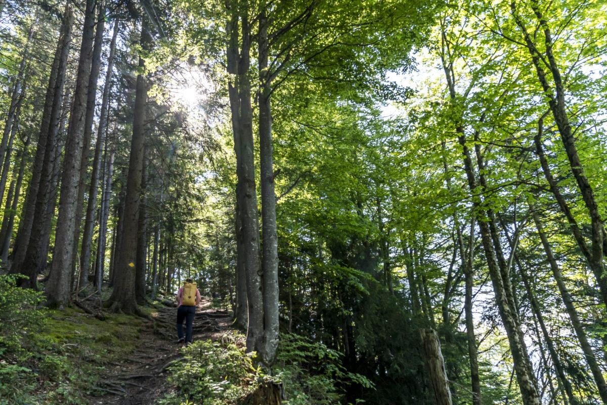 Wald Toggenburg