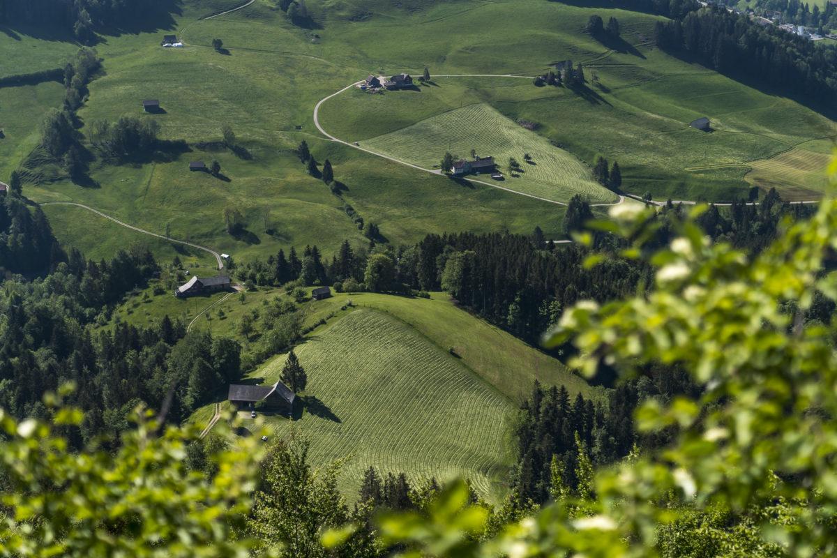 Wilkethöchi Aussicht Toggenburg