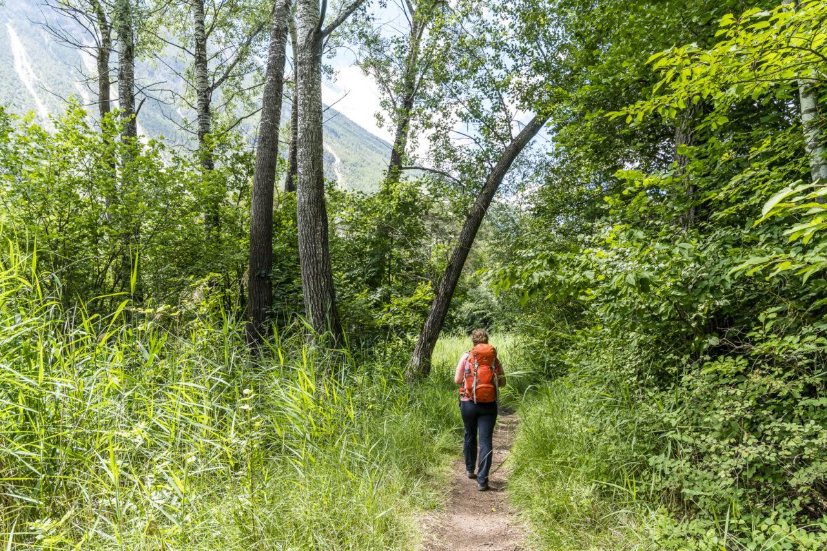 Wanderung Pfynwald