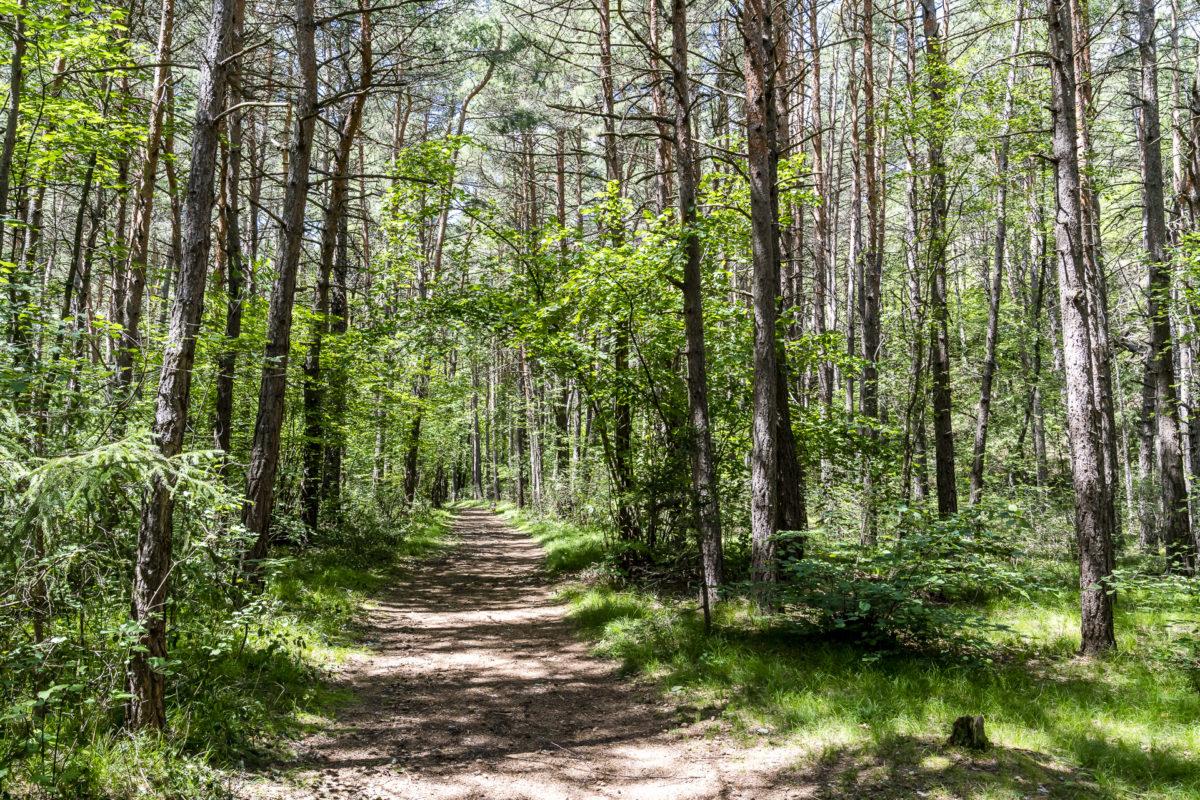 Pfynwald Landschaft