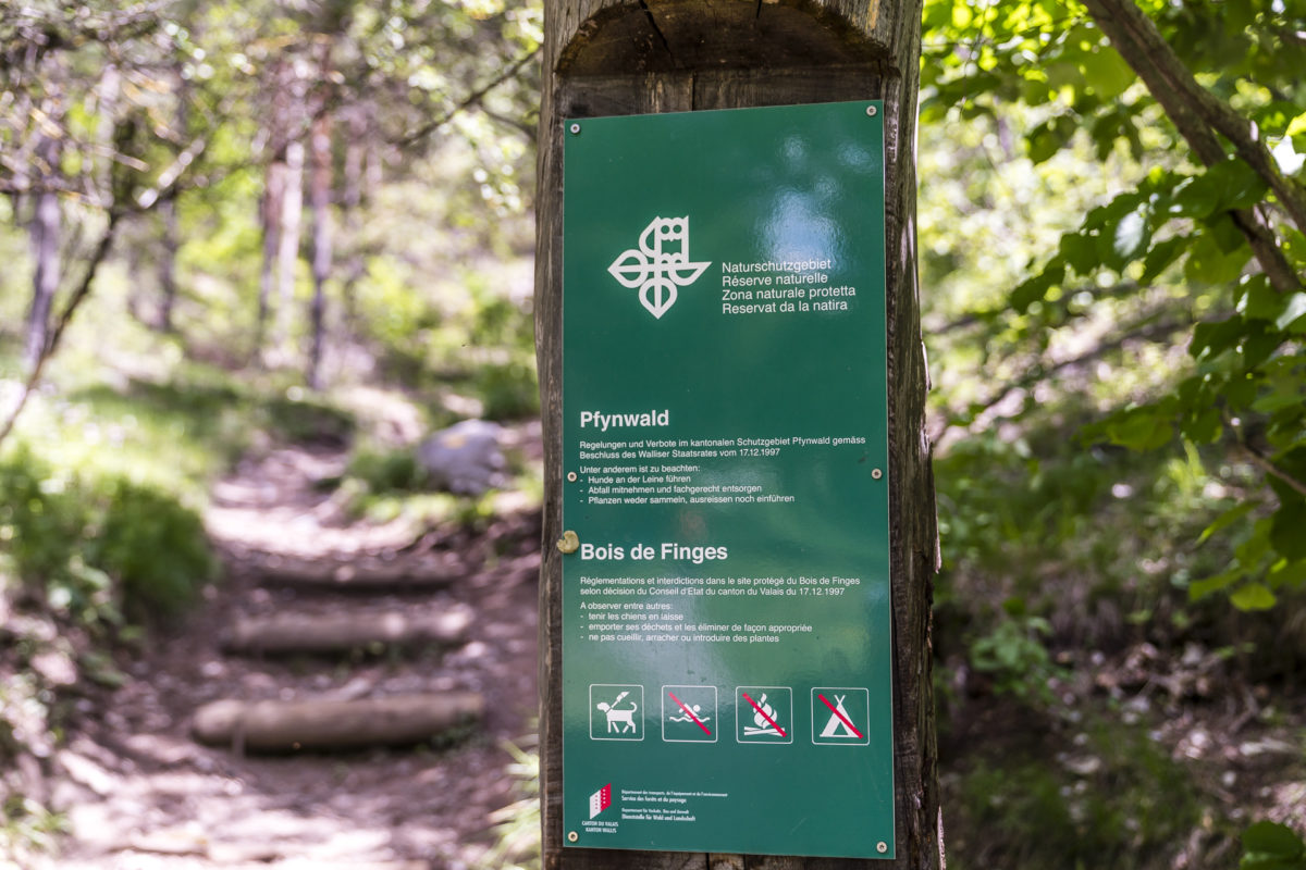 Naturschutzgebiet Pfynwald