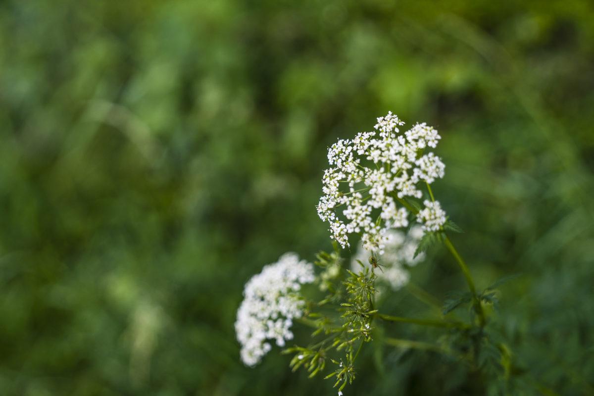 Blüten im Jura