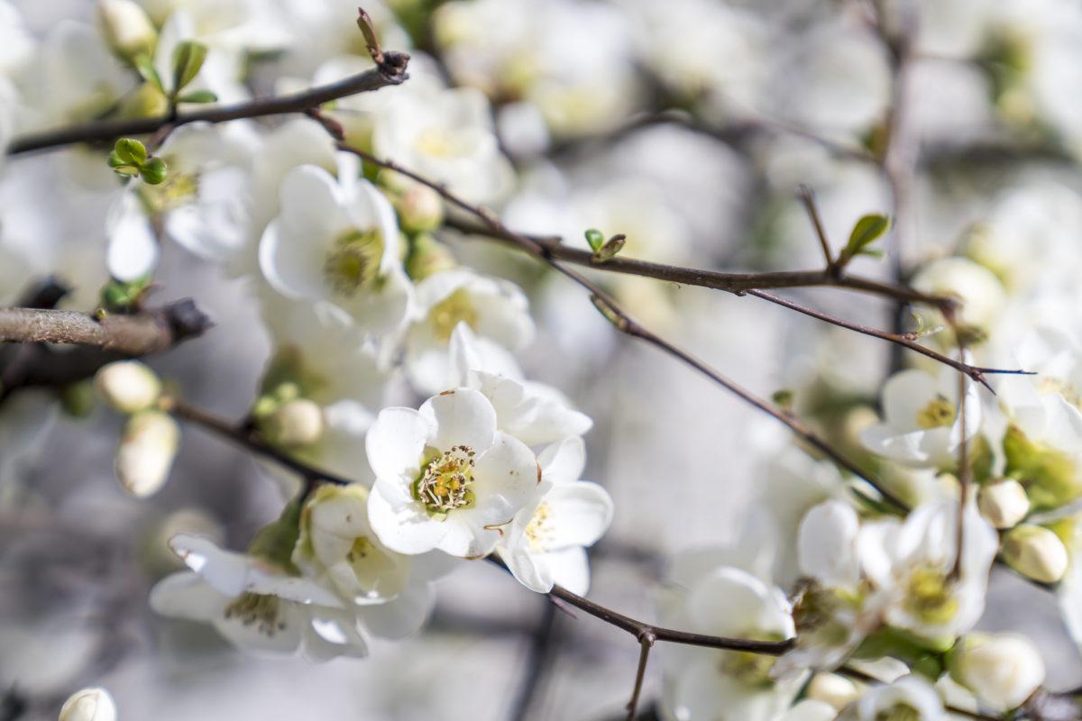 Blüten München