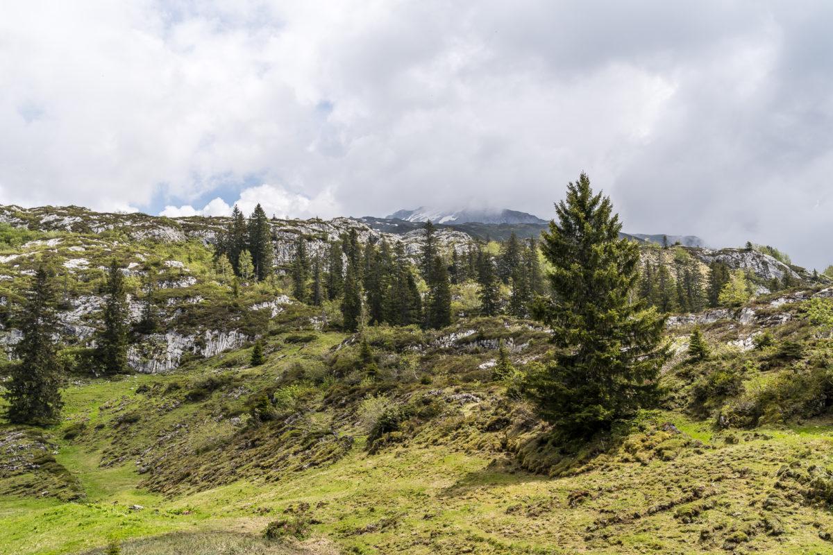 Karstfelsen Bödmeren