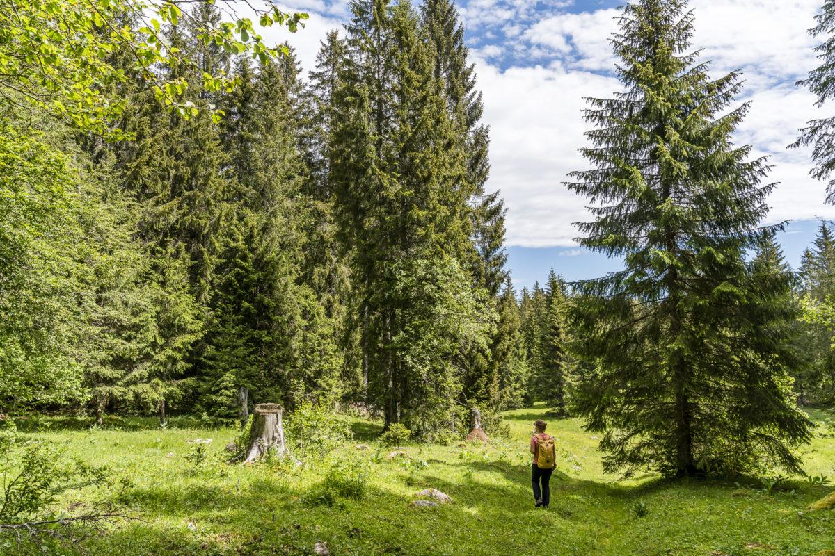 Monlési Wanderwege