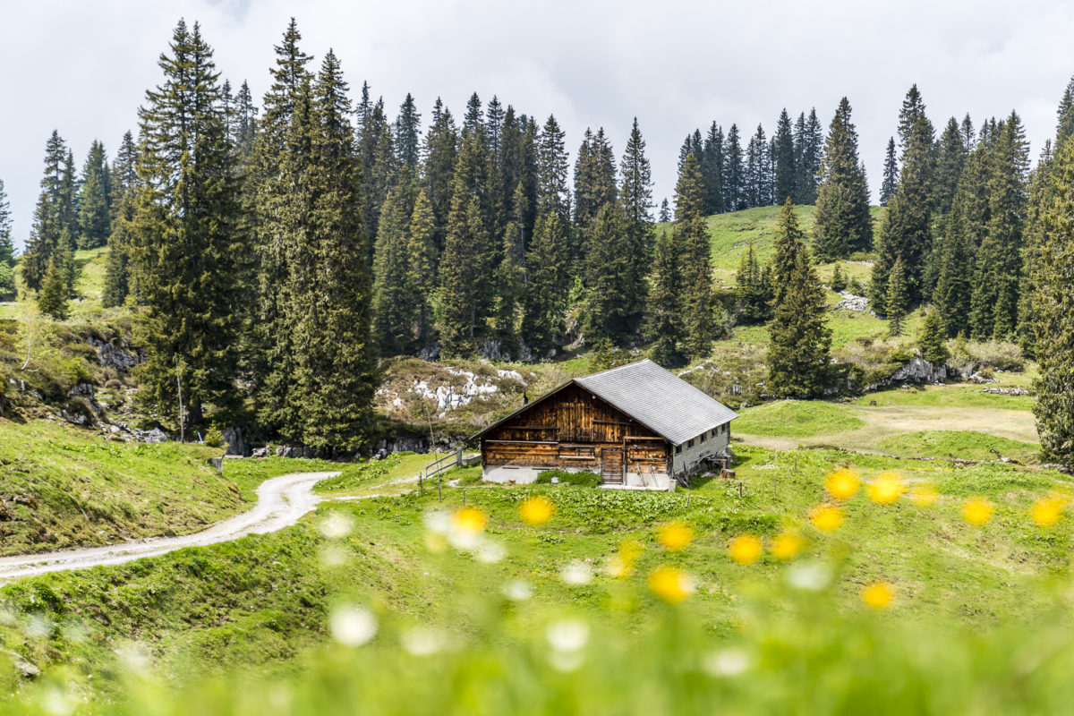 Muotathal Alpen Bödmeren