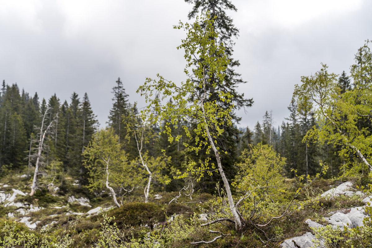 Urwaldweg Bödmeren Muotathal