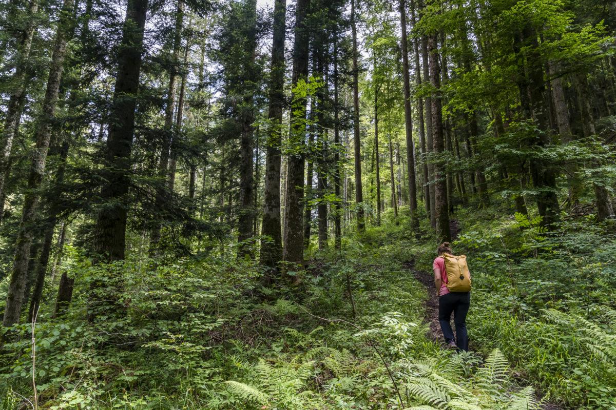 Waldweg im Jura