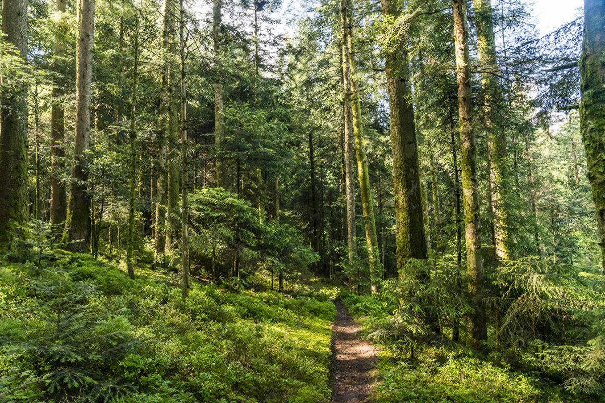 Wald Emmental